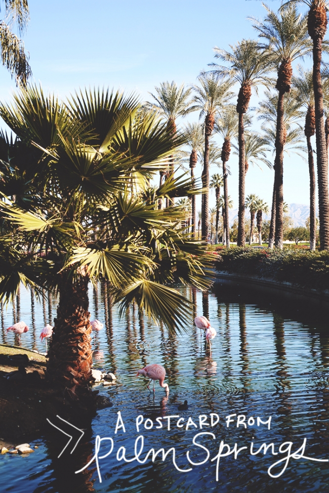 A Postcard from Palm Springs Title_Mintz