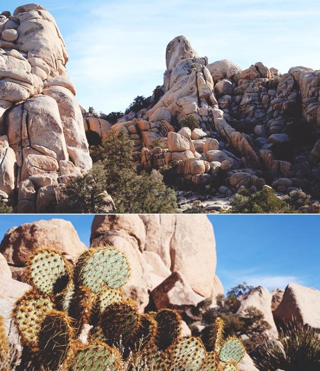 Joshua Tree Cactus_Mintz