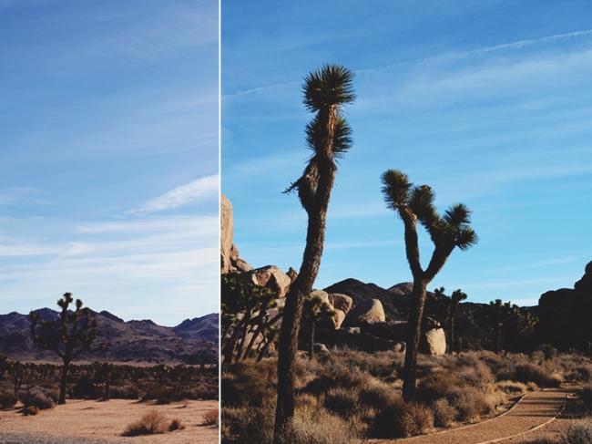 Joshua Tree Collage 2_Mintz