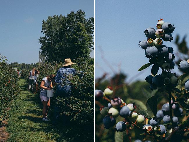MI Blueberries 2014_Mintz-collage2