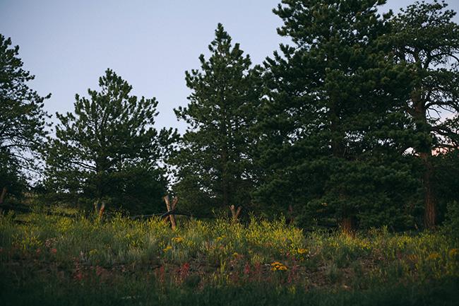 EMR 2014_Needles_Resize1