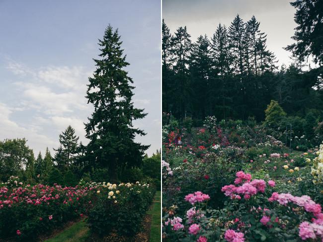 PDX Rose Garden Collage 2015_Needles